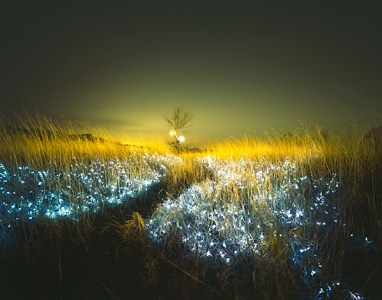 Lee Eunyeol, lit grasses