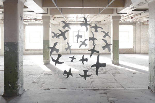 Nicola Yeoman, birds