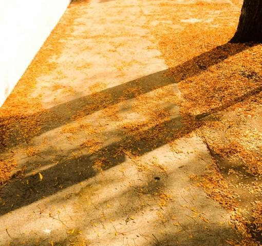 Dana Colcleasure, EIL Stuck Series, gold (leaves, shadows)
