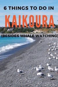 Kaikoura in New Zealand is famed for being an amazing Whale Watching spot. But there are plenty of other things to do and see too! Get inspired here