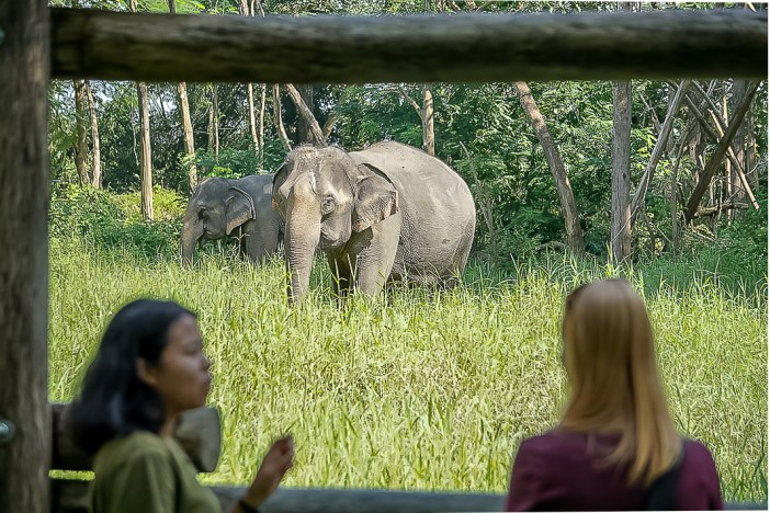 Are you looking to visit an elephant sanctuary in Thailand? Are you wondering which is the most ethical elephant sanctuary? Find out about my visit to Elephant Valley Thailand in Chiang Rai to find out why I think this is the best elephant sanctuary in Thailand. #elephantsanctuarythailand #thailandelephants #ethicaltourism #animaltourism