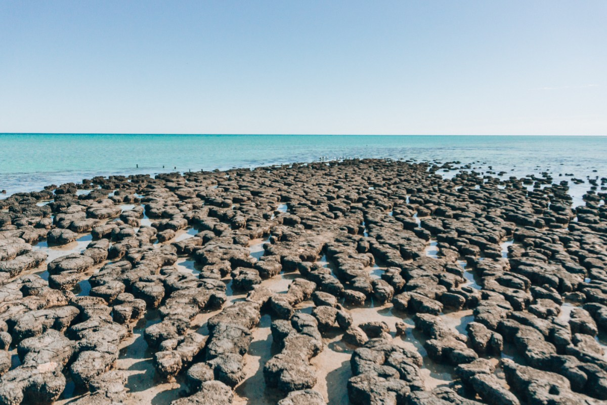 Click here for the top things to do at Shark Bay Western Australia in a 2WD. There are some great activities in Shark Bay for you to experience the best of what this World Heritage Site has to offer. It's a must see on your Western Australia road trip! #sharkbay #sharkbaywa #shellbeach #hamelinpool #eaglebluff #westernaustralia #roadtripaustralia