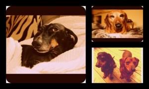 dog blog1
