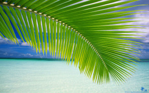 beach-palm-leaf-1920x1200