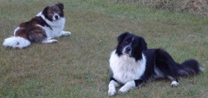Tally and Sally on grass2c