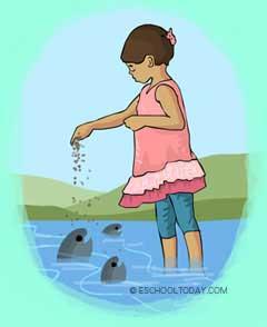 fish pond feeding - ¿Qué es la acuicultura?