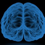 decisiones y cerebro