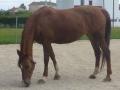 cavalls-13