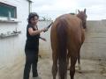 cavalls-21