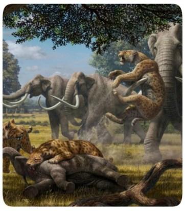 Savana - África - Elefantes - Felinos