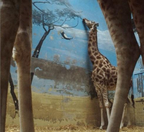 Foi tirada em 2012, no Parc Zoologique de Paris
