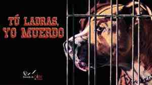 Cartel Youtube Tu ladras yo muerdo Escuela de Cine de Malaga