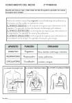 Fichas primaria: Conocimiento del medio