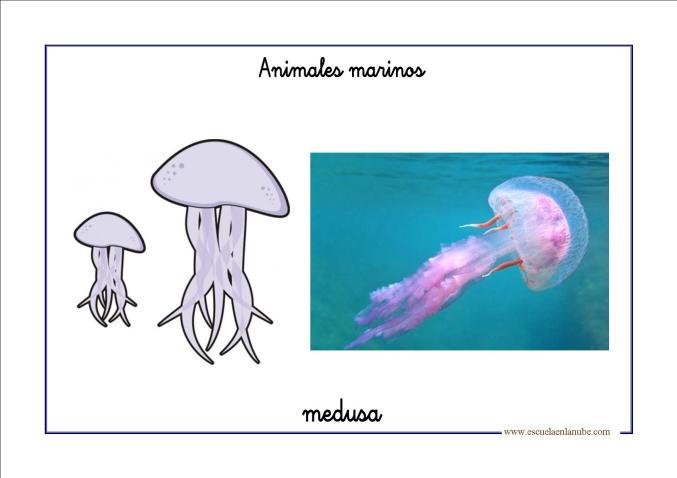 Fichas de infantil: Vocabulario básico de animales marinos