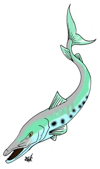 animales marinos 02