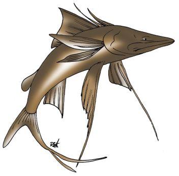 animales marinos 61