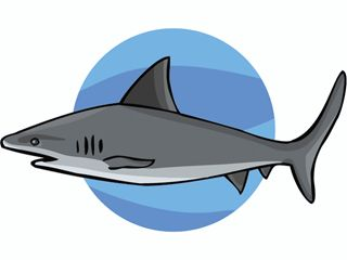 animales marinos 67