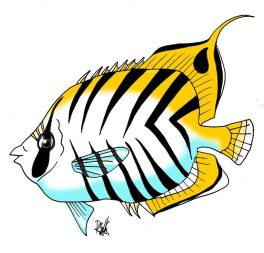 animales marinos06