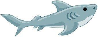 animales marinos11