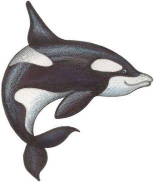 animales marinos26