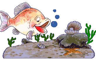 animales marinos38