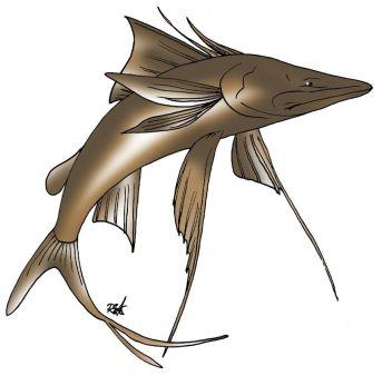 animales marinos62