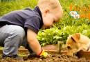 Juego infantil para fomentar el cuidado de los animales