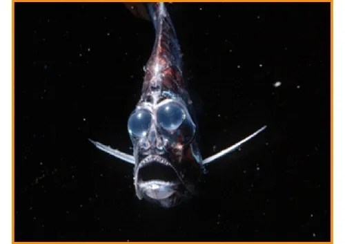 Pez fantasma, pez hacha