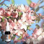 Manzano Silvestre