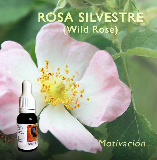 Rosa Silvestre (WILD ROSE)