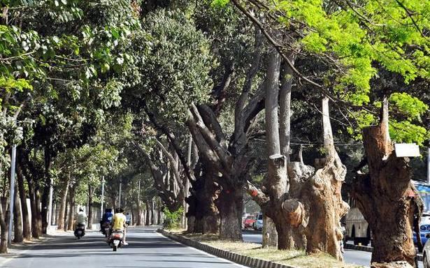 Jayamahal Road Treeline