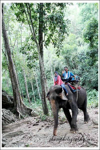 elephant-trekking-krabi01