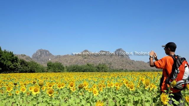 lopburi-ladang-bunga-matahari-thailand-eshamzhalim