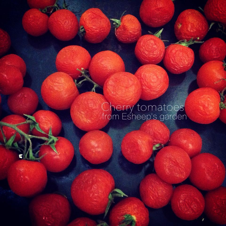 mùa vụ cà chua 1