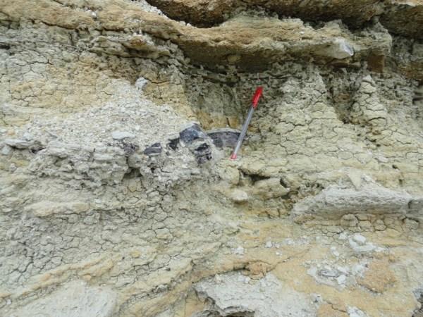 Excursion - Mine Fossils Identification8