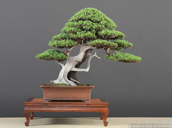 nov2014_bonsai_10