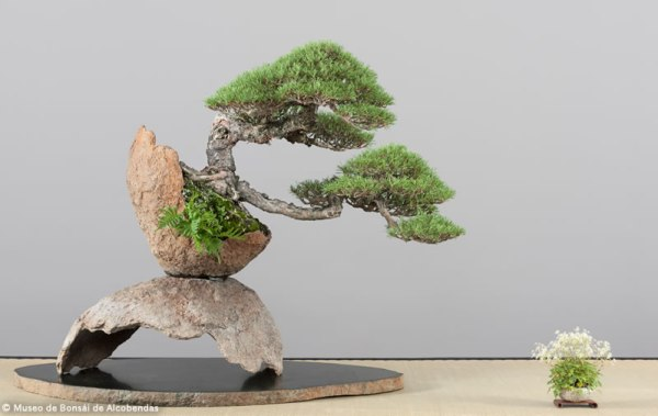 nov2014_bonsai_9