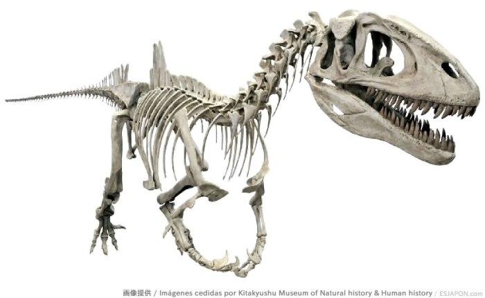 「コンカベナトール」の全身骨格標本