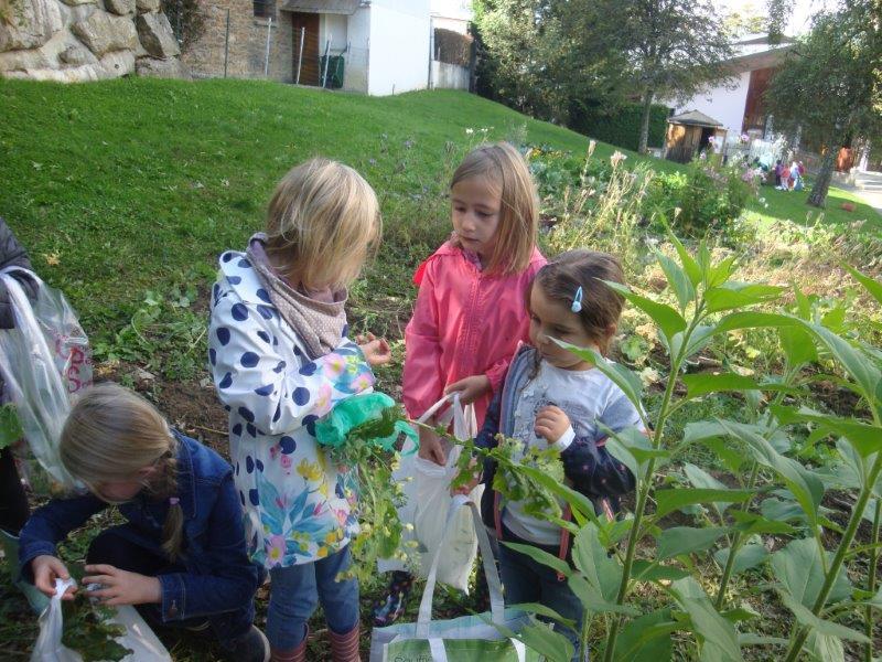 Récolte au jardin des écolibristes par les élèves de GS et CP de l'école
