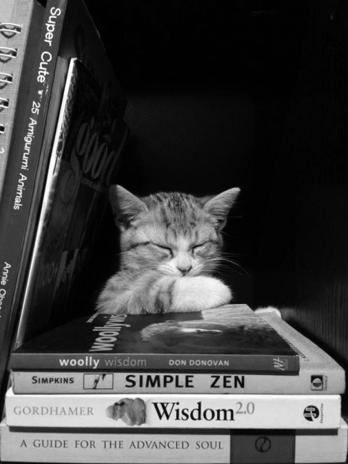 cat-and-books-55