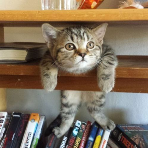 cat-and-books-57