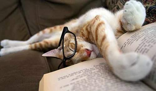 cat-asleep-reading-uyur-uyanik-kedi-kitap-okuyor