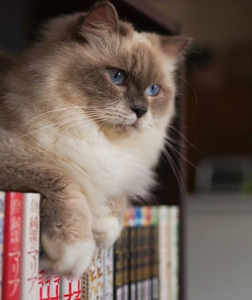 cat-reading-book-kedi-kitap-okuyor-56