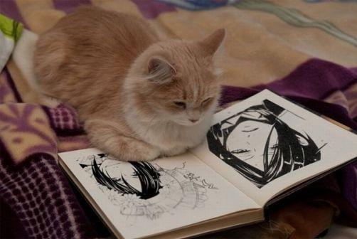 cat-reading-kedi-kitap-okuyor-14