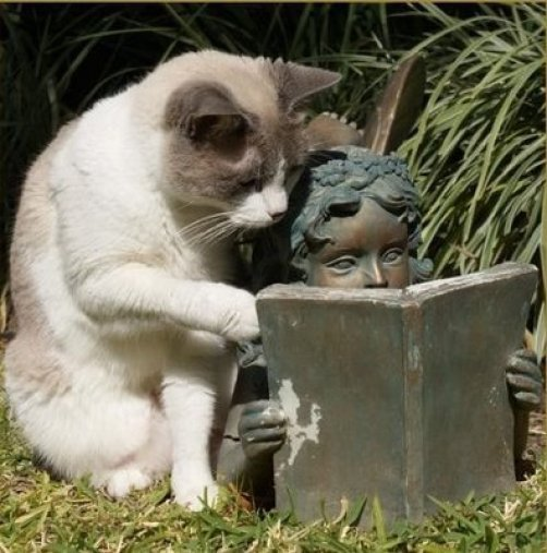 cat-reading-kedi-kitap-okuyor-15