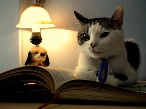 cat-reading-kedi-kitap-okuyor-19