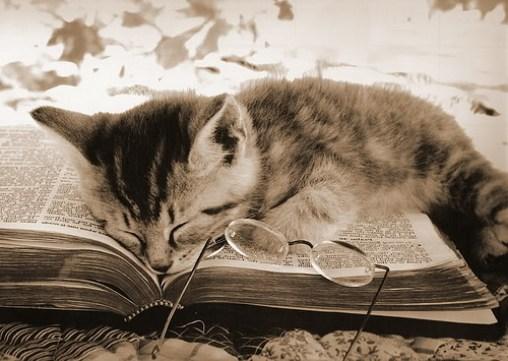 cat-reading-kedi-kitap-okuyor-21