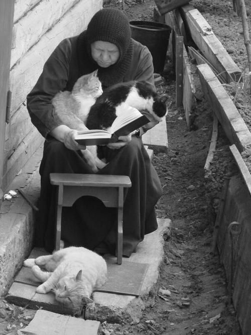 cat-reading-kedi-kitap-okuyor-43