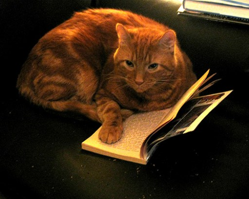 cat-reading-kedi-kitap-okuyor-47