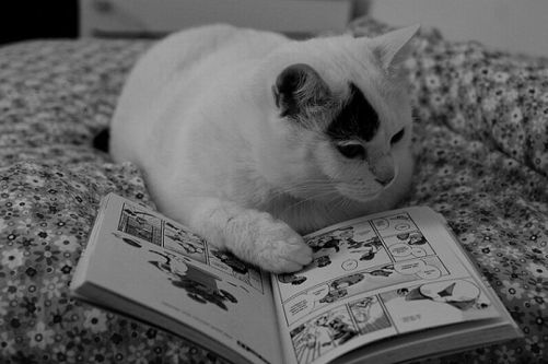 cat-reading-kedi-kitap-okuyor-8
